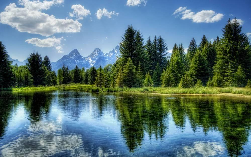 Laker-Forrest.jpg