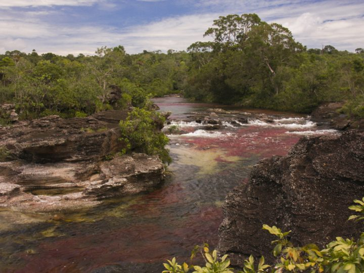 caño-cristales-the-river-of-seven-colors8-720x540